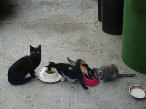stray-cat-mom-her-3--large-msg-118081710238