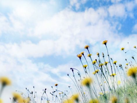 Wallpaper_Windows_7_-_Meadow_flowers