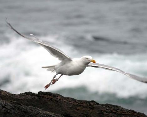 2004-09-16_195441_seagull3